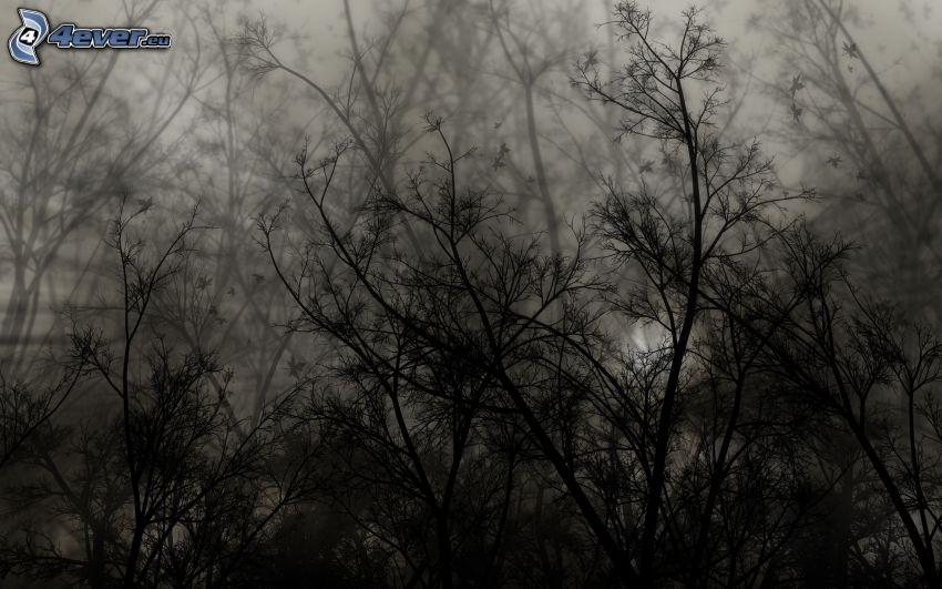 buske, svartvitt foto