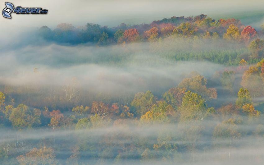 dimma, färggranna träd