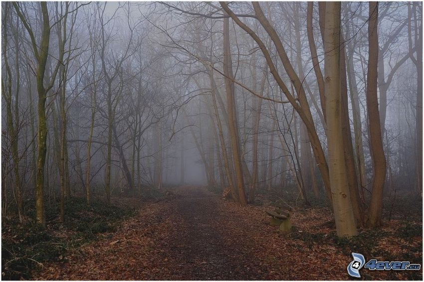dimma i skog, skogsväg, bänk