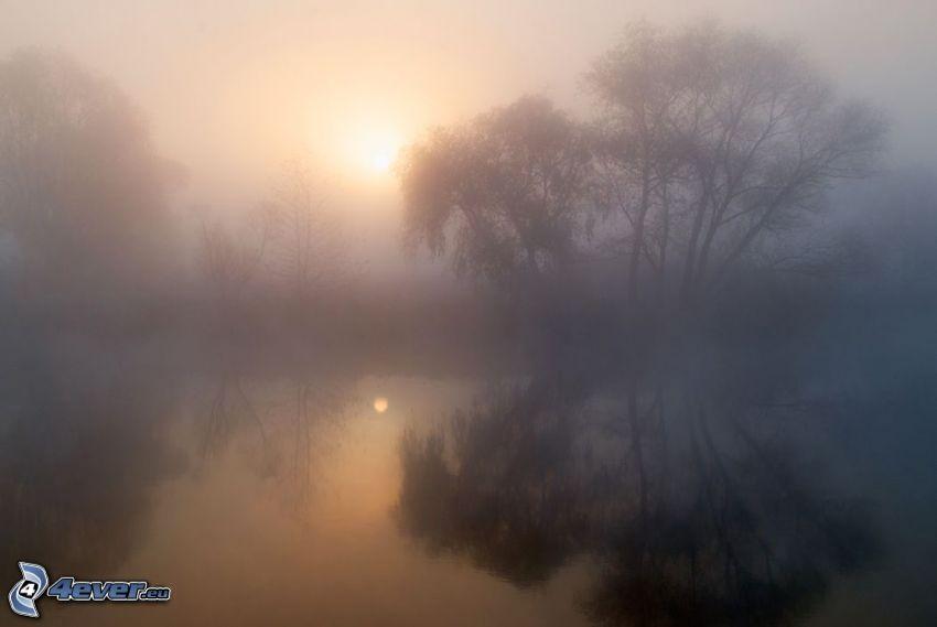 dimma över sjö, träd, svag sol