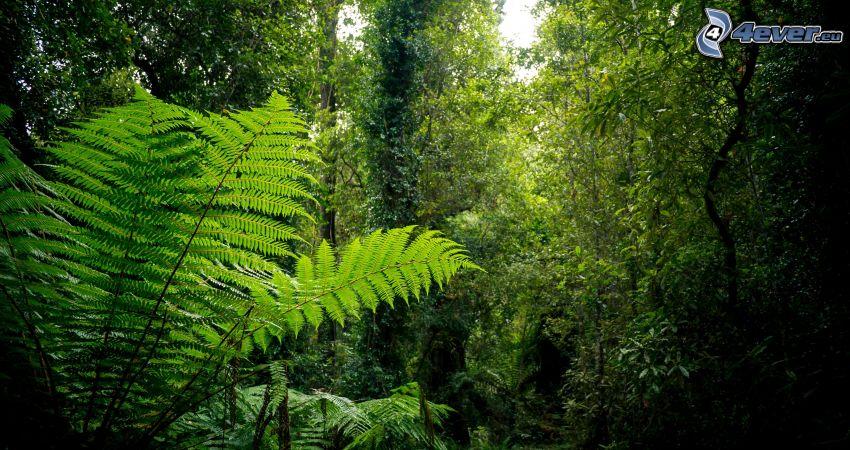 djungel, grönska, ormbunke