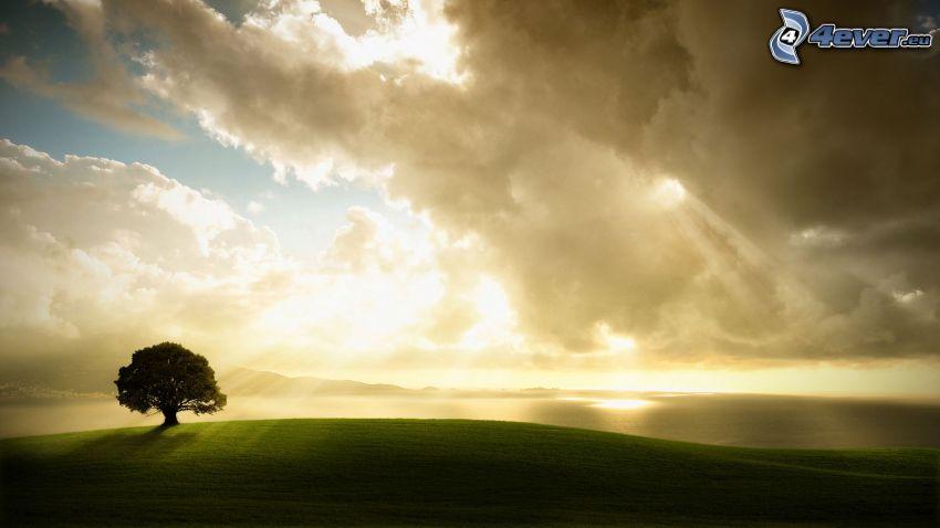 ensamt träd, åker, sol bakom molnen, solstrålar