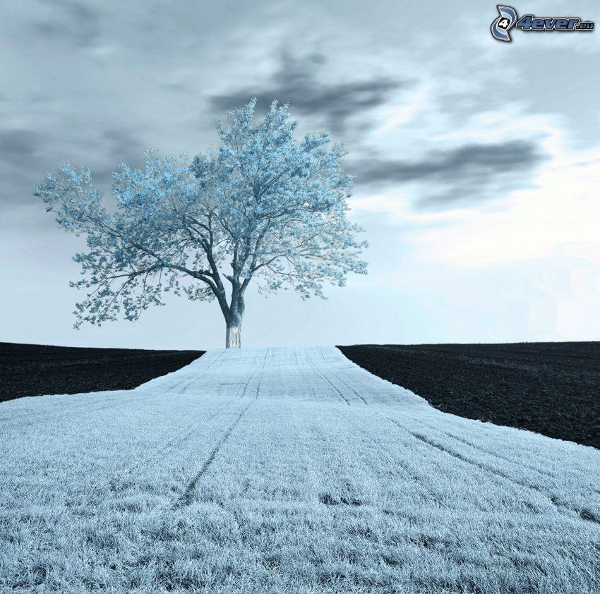 ensamt träd, åker, svart och vitt
