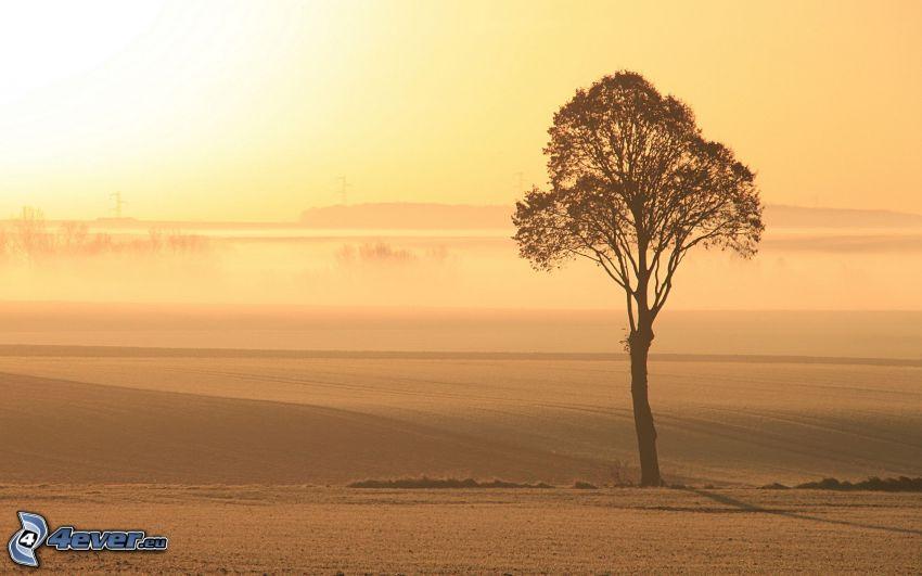 ensamt träd, fält, gul himmel