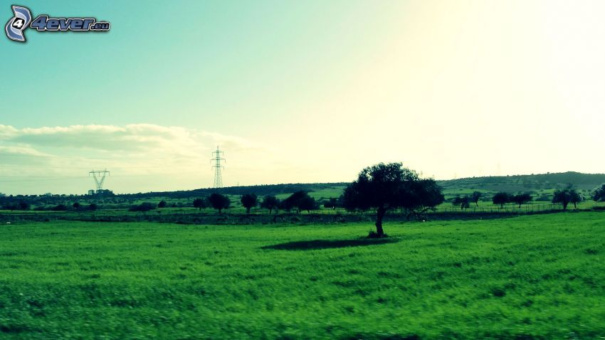 ensamt träd, gräs