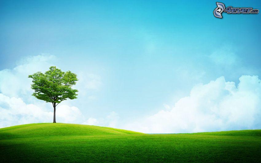 ensamt träd, grön äng