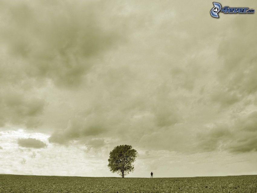 ensamt träd, himmel, äng