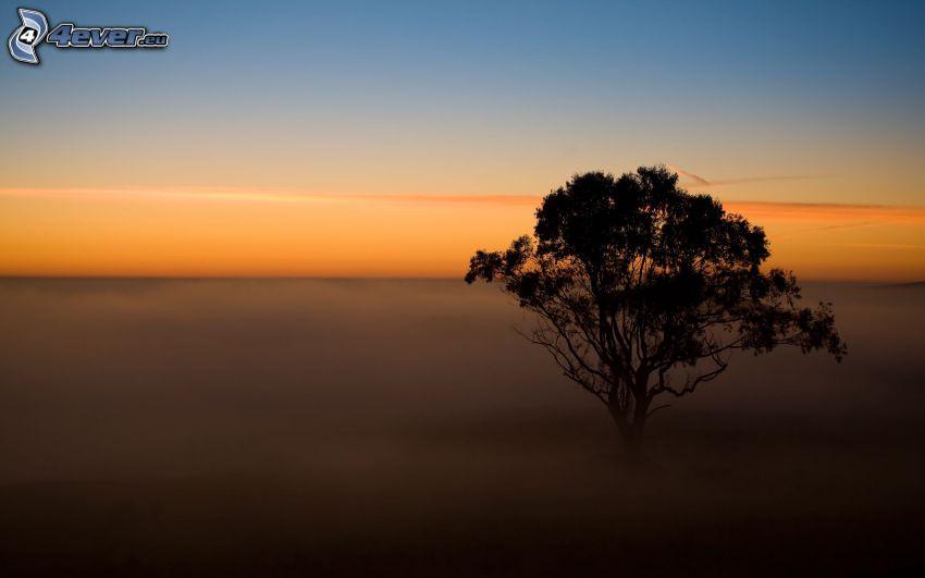 ensamt träd, kvällshimmel, markdimma