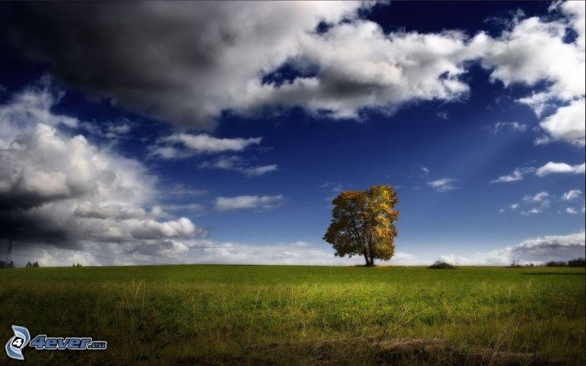 ensamt träd, moln, äng