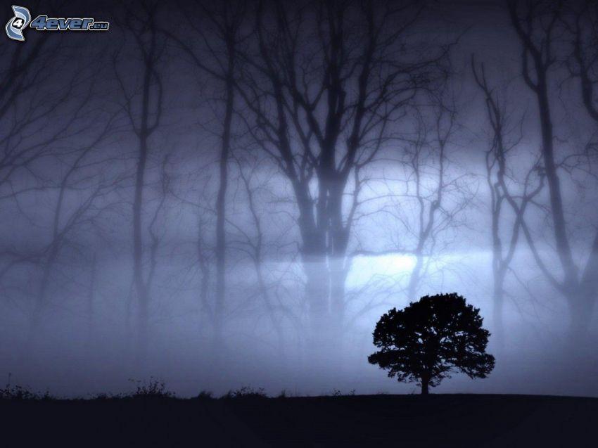 ensamt träd, mörker, dimma