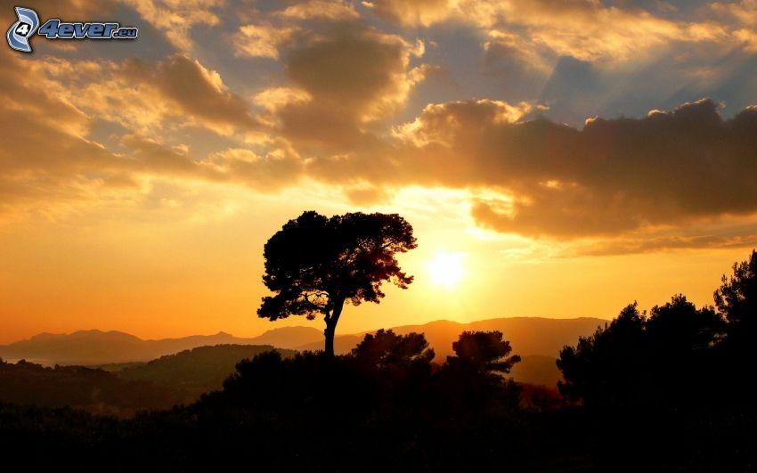ensamt träd, solnedgång över berg, siluetter av träd, orange himmel