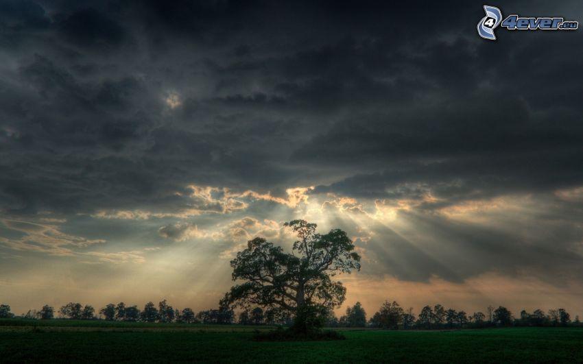 ensamt träd, solstrålar, moln