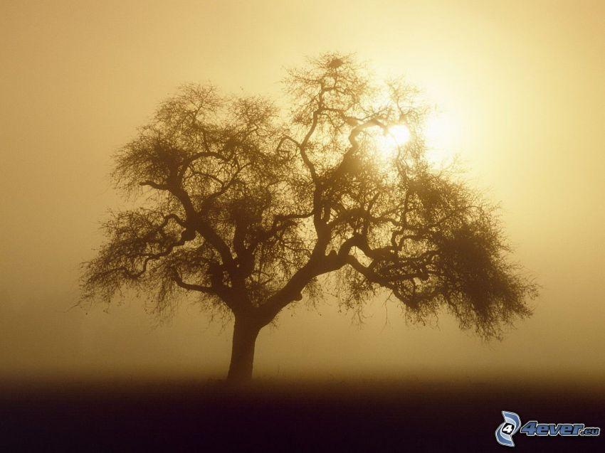 ensamt träd, svag sol, dimma