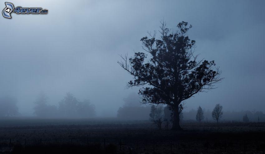ensamt träd, träd i dimma, träd