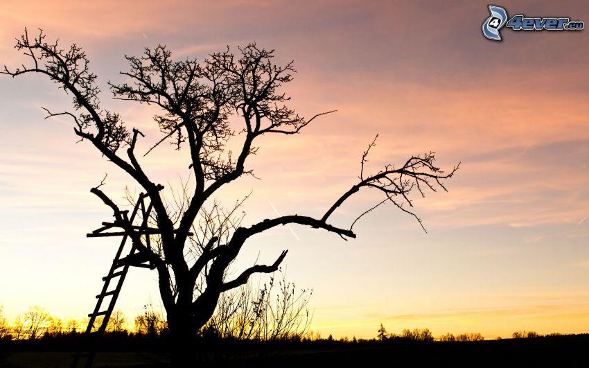 ensamt träd, trädkoja, siluett av ett träd, efter solnedgången