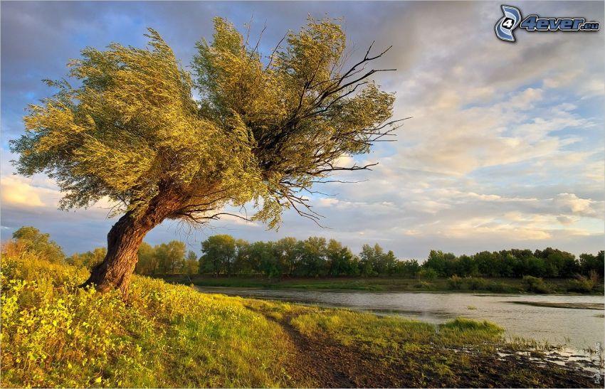 ensamt träd, träsk