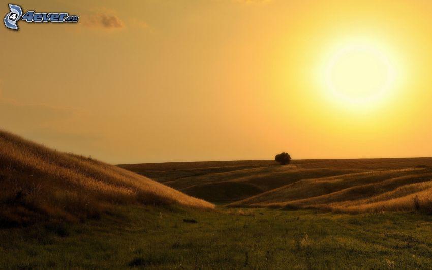 fält, skinande orange sol