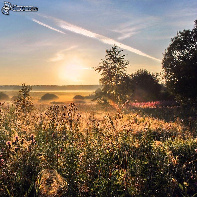 fältblommor, solnedgång över äng