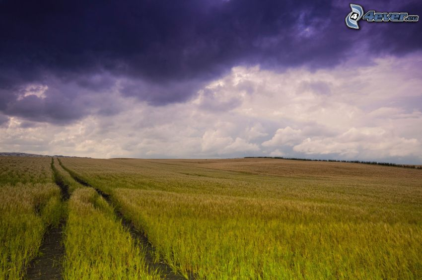 fältstig, åker, mörka moln