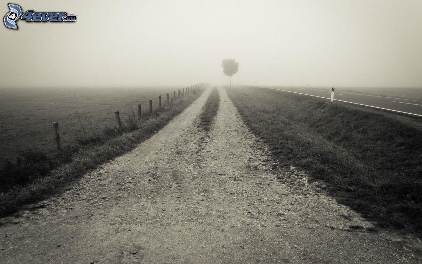 fältstig, dimma, ensamt träd