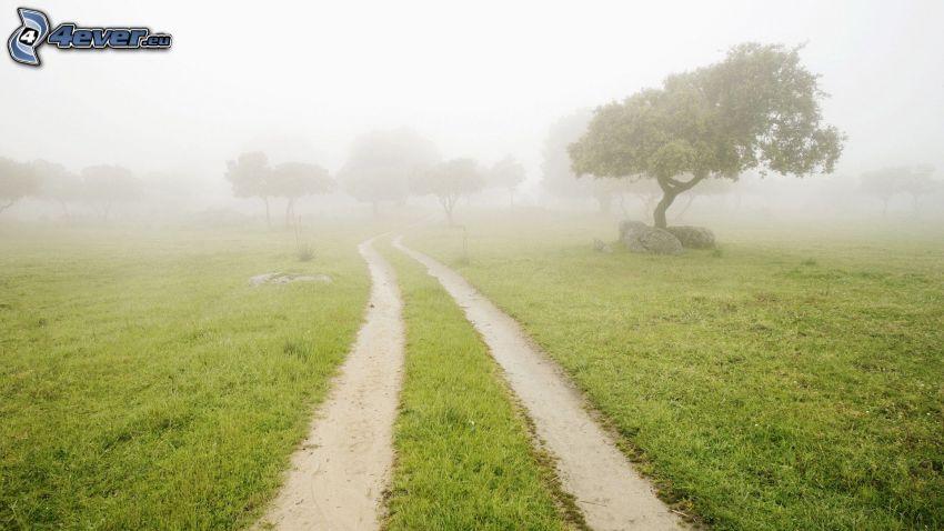 fältstig, ensamt träd, gräs, dimma