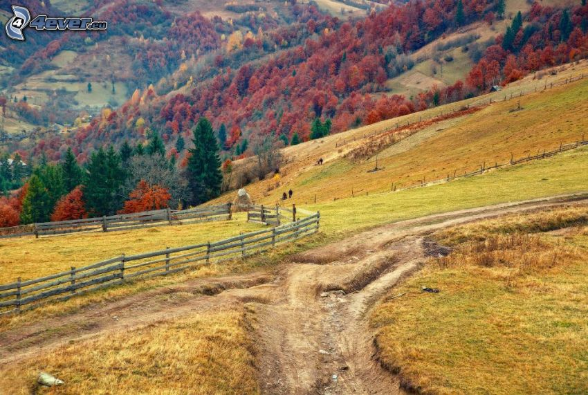 fältstig, kullar, staket, färggranna träd