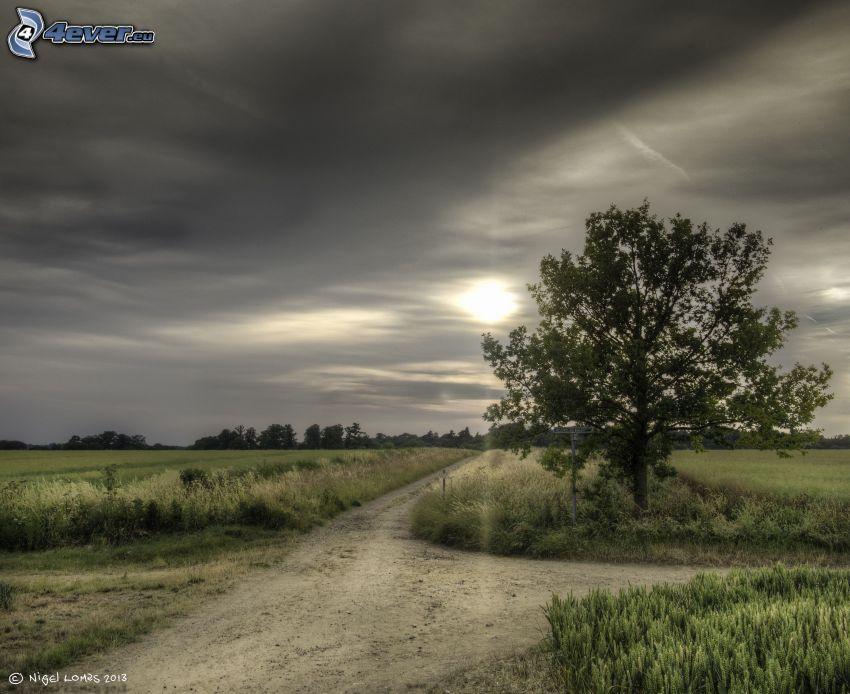 fältstig, vägkorsning, träd, sol bakom molnen