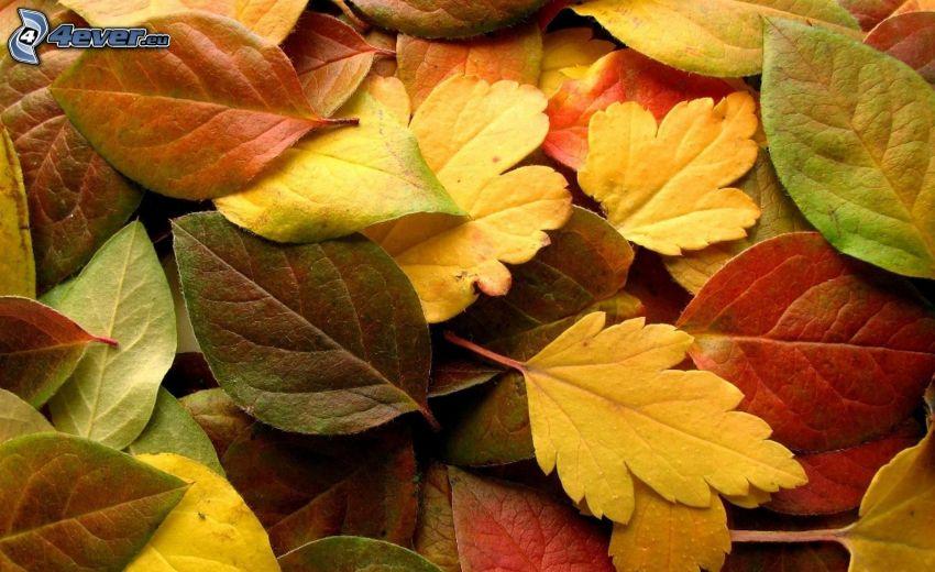 färggranna löv