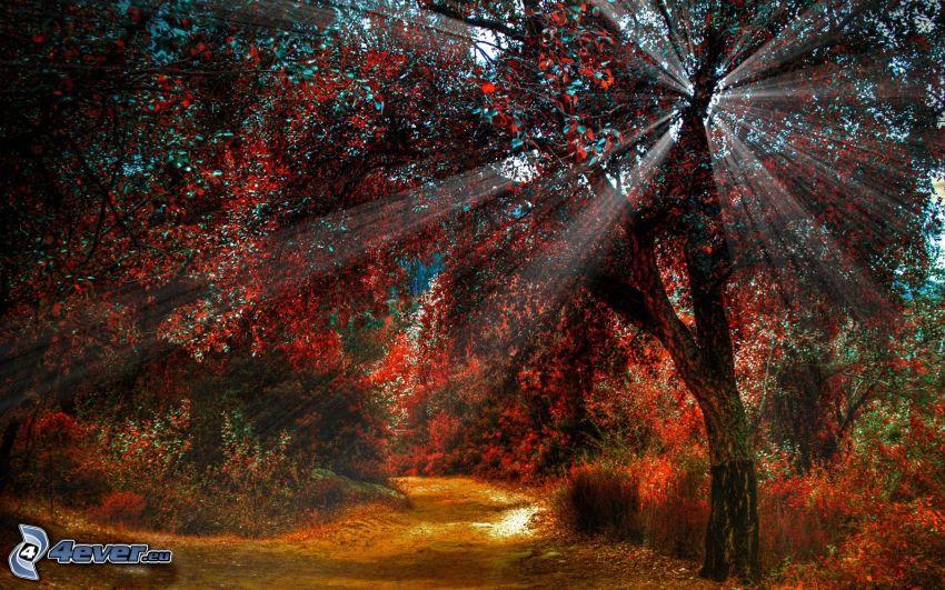 färggranna träd, solstrålar