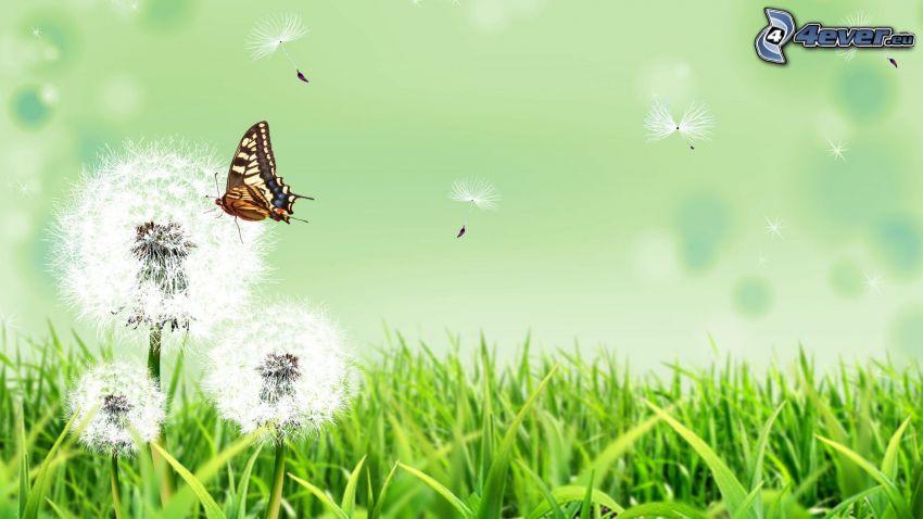 fjäril, avblommade maskrosor, gräs