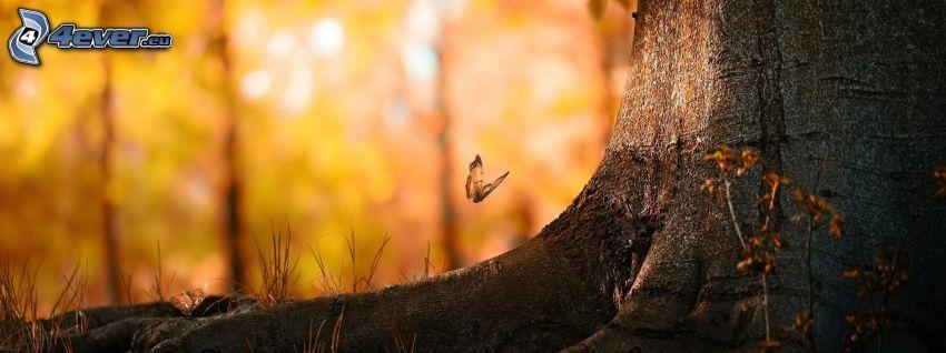 fjäril, stam, panorama