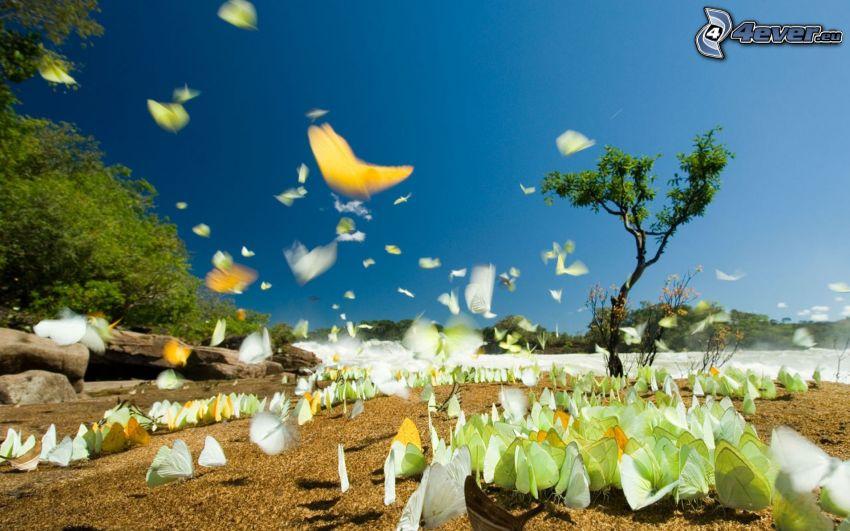 fjärilar, ensamt träd