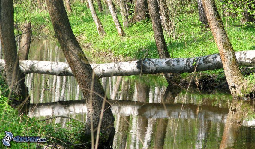 flod, bäck
