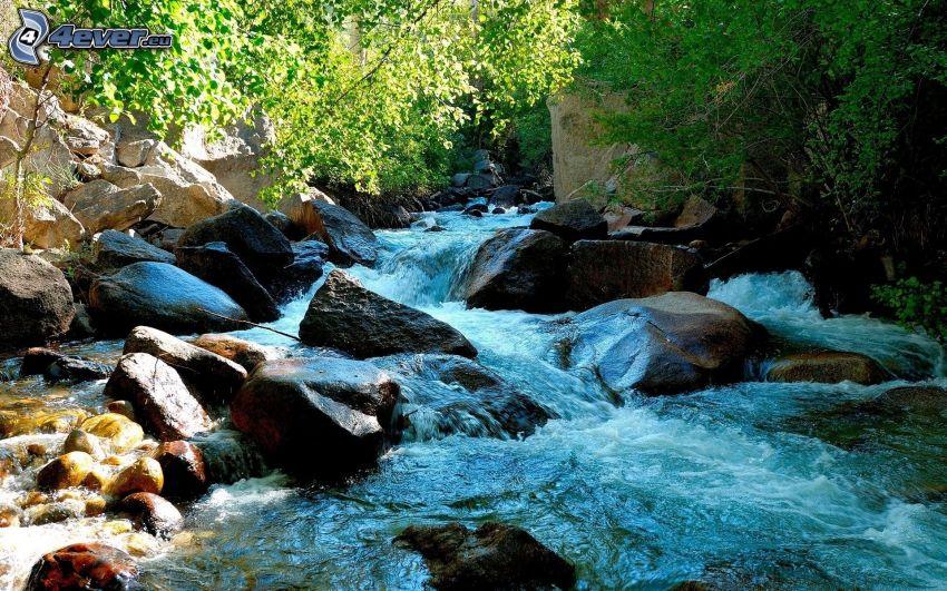flod, flodstenar, träd