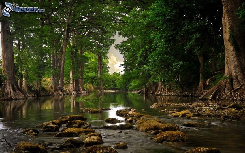 flod, gröna träd, flodstenar