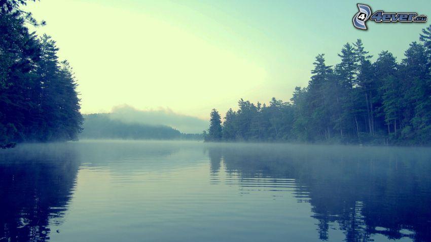 flod, skog, dimma