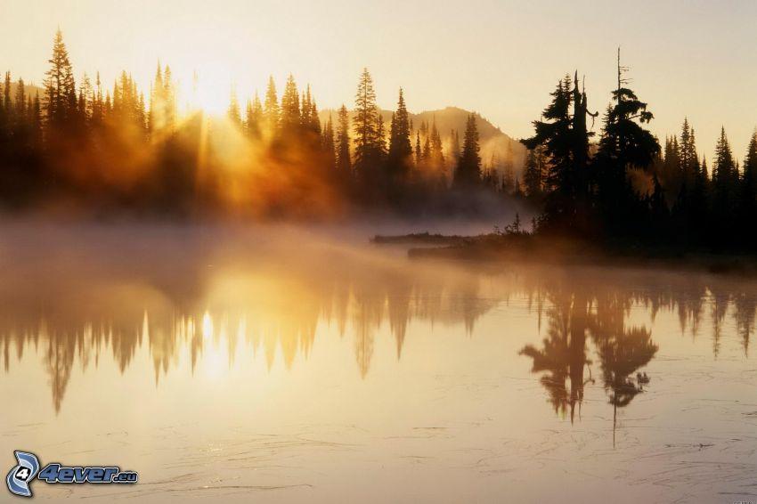 flod, solnedgång bakom skogen, dimma över sjö