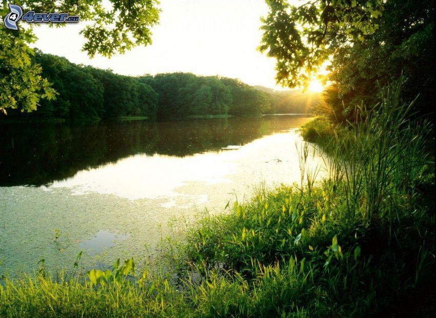 flod, solnedgång bakom skogen, grönska