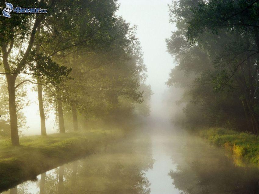 flod, träd, dimma