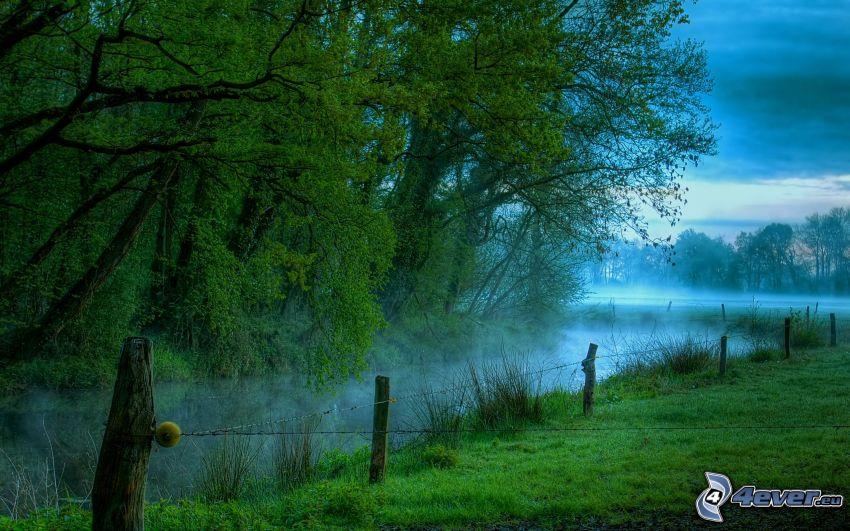 flod, träd, staket
