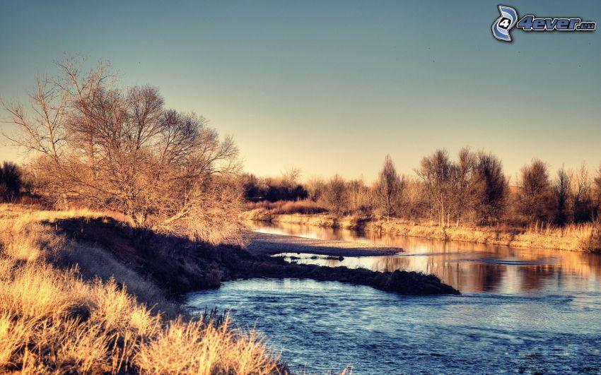 flod, träd