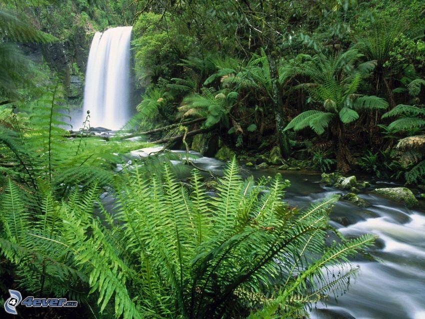 flod, vattenfall, grönska, ormbunke