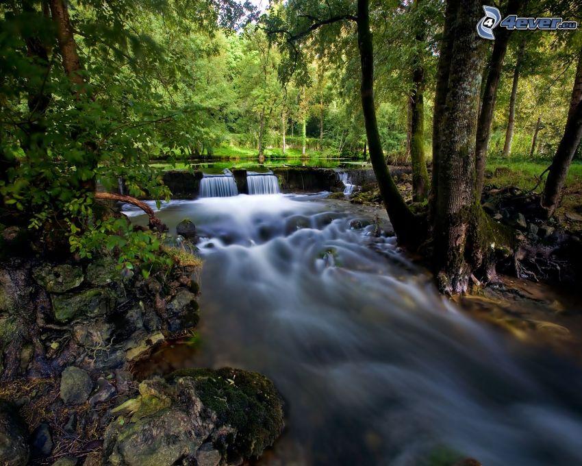 flod, vattenfall, skog, grönska