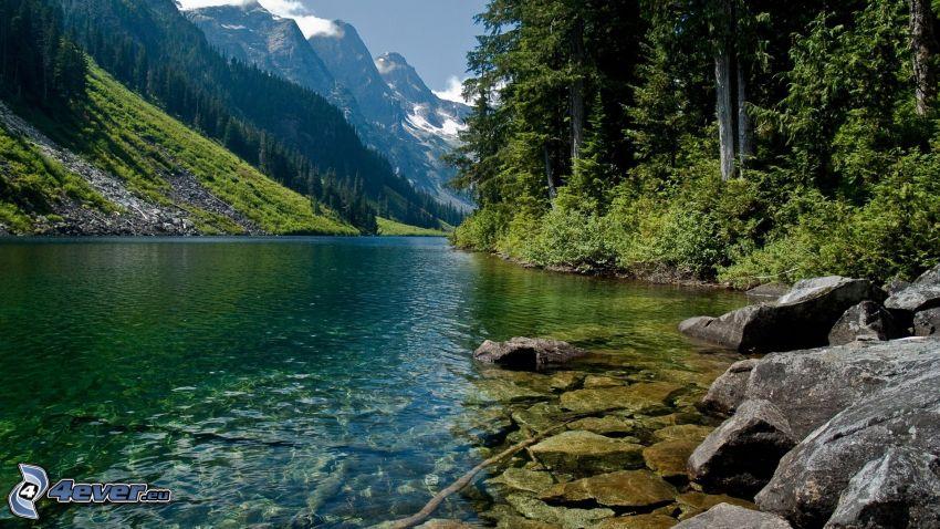 flod i skog, berg, stenar