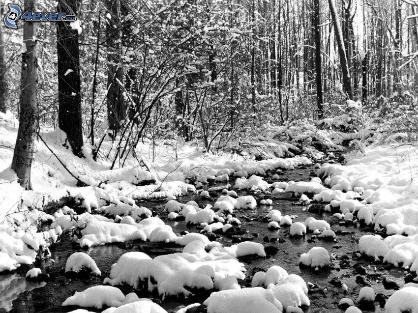 flod i skog, snöig skog