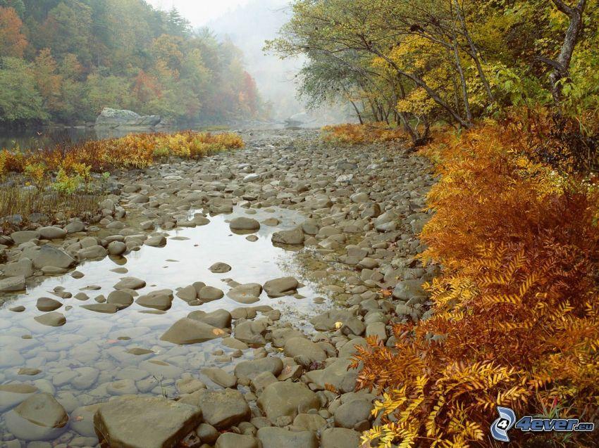 flodstenar, vatten, flod, färgglada höstträd