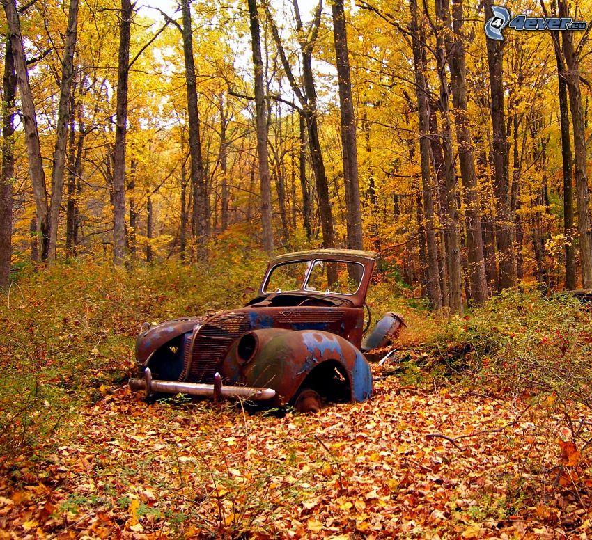 gammal förstörd bil, vrak, skog, gula löv, höst