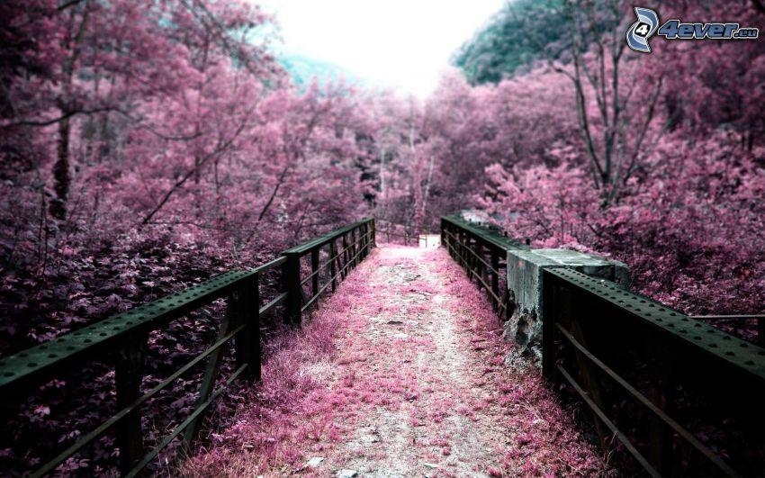 gångbro, blommande träd