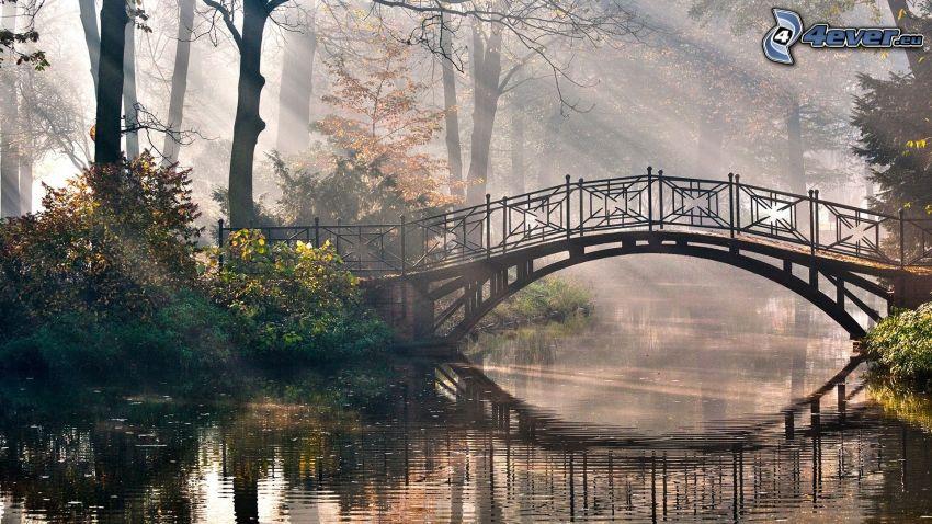 gångbro, flod, solstrålar i skog