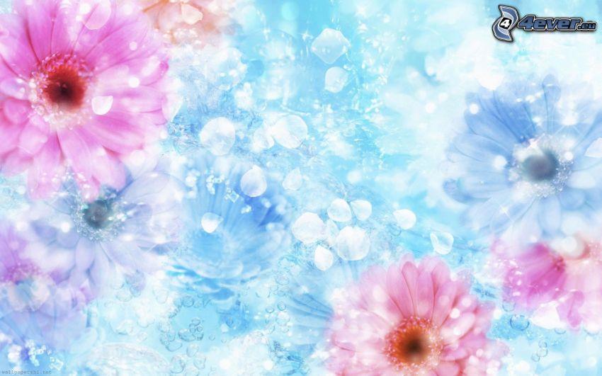 gerberor, kronblad, blå bakgrund